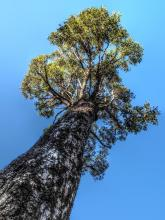 The tree grew large and strong and its top touched the sky
